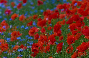 Wilde Veldbloemen von Richard de Boorder