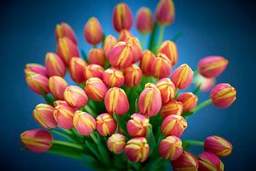 Boeket rood-gele dansende tulpen in close-up van Jenco van Zalk