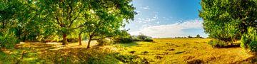 Landschaft im Sommer, Marschland an der Ems von Günter Albers