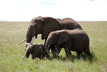 Familie olifant sur Paul Riedstra