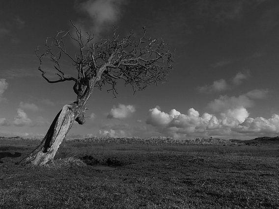 Alleenstaand (Alone) van Hendrik Jan Ackermann