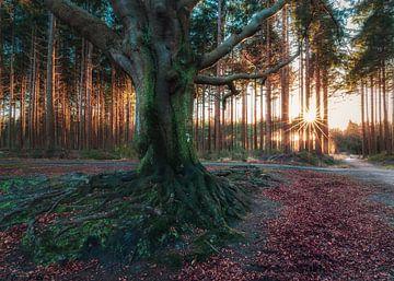 Bakkeveen Friesland von Edwin Kooren