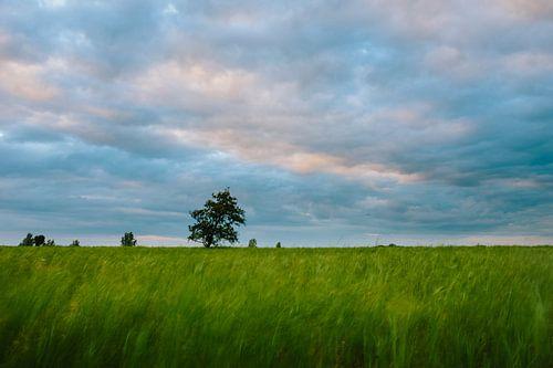 Boom in het rietland