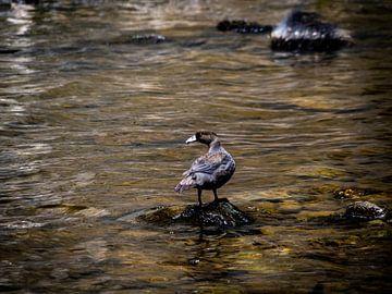 Die besondere blaue Ente von Rik Pijnenburg