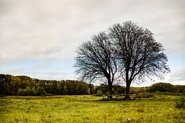 Herbst auf Frühlingsreise von Linsey Aandewiel-Marijnen