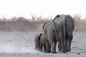 Elefantenrücken von Petervanderlecq
