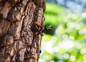 De vlinder en de wesp van Anke Kaal