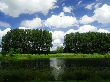 Bomen aan een ven von Sanne Compeer
