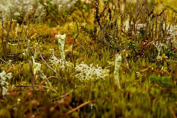 paddestoeltje in herfstige kleuren van Merijn Loch