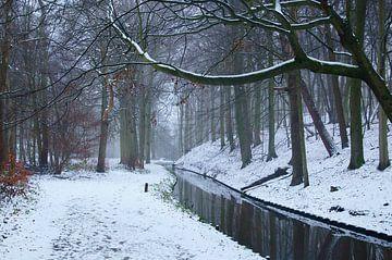 Het bos in de winter tijdens sneeuw van Discover Dutch Nature