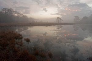Het Kootwijkerveen bij zonsopkomst van