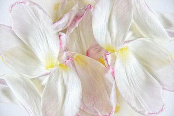 Blütenblätter von Claudia Moeckel
