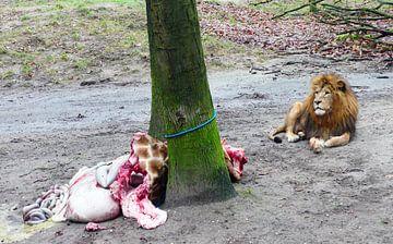 Leeuw en zijn giraffe lunch van Petra Dielman