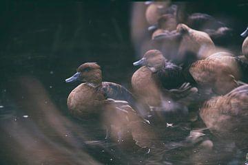 birdies long exposure van Karin vanBijleveltFotografie