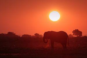Olifant met zonsondergang