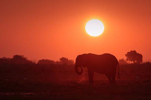 Elefant mit Sonnenuntergang von Annemiek van Eeden