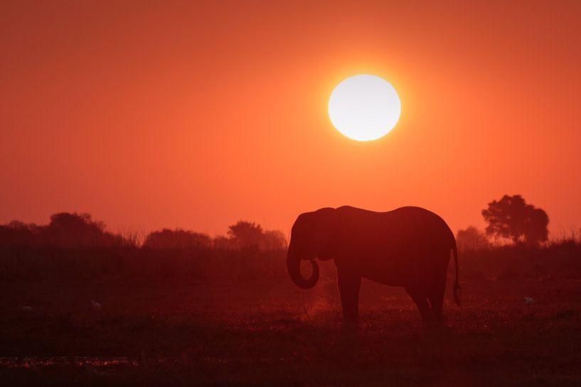 Olifant met zonsondergang van Annemiek van Eeden