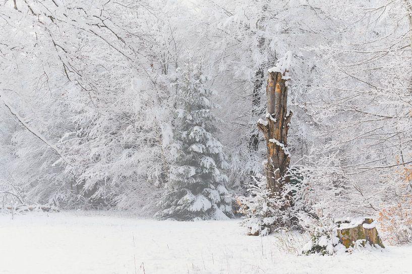 Schnee im Frühling von Max Schiefele
