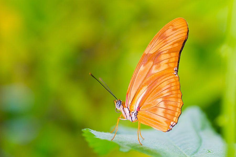 Vlinder passie