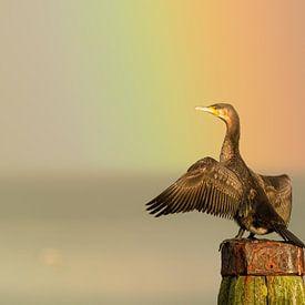 Aalscholver in de regenboog van Erwin Stevens