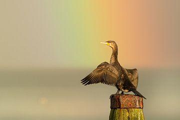 Kormoran im Regenbogen von Erwin Stevens