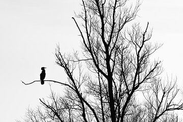 Silhouette d'un cormoran sur Jarno van Bussel