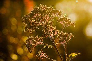 Zon door een bloem
