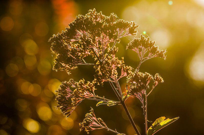 Zon door een bloem van Photography by Karim