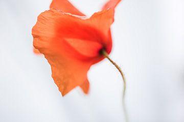 poppy von Hilde Van Hove