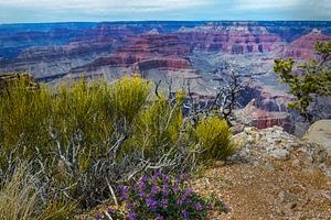 Bloeiende bloemen aan de rand van de Grand Canyon