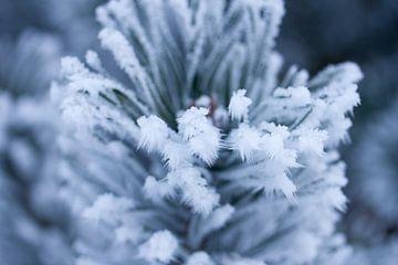 grüne Pflanze im Winter von Karijn Seldam