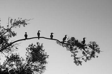 Vogel Silhouet von Lucas De Jong