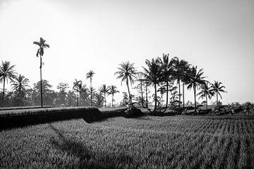 Zwart wit rijstveld op Bali van Ellis Peeters