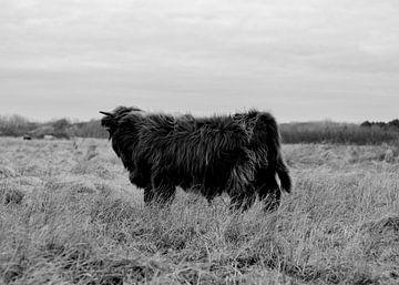 Highlander écossais, en noir et blanc sur Jessica Bakhuijs