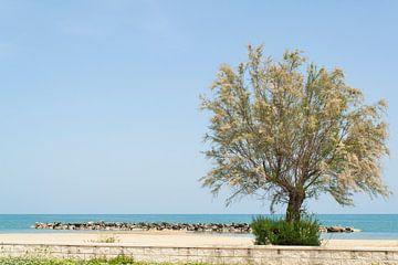 De oostkust van Italië van Aukelien Minnema