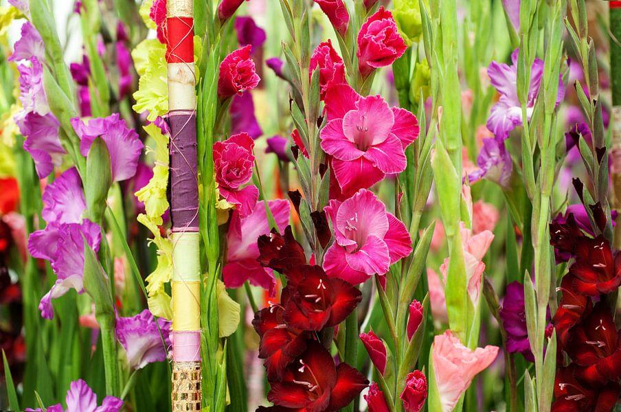 prachtige Gladiolen setting