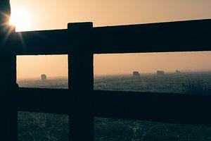 Hek en koeien in de mist van