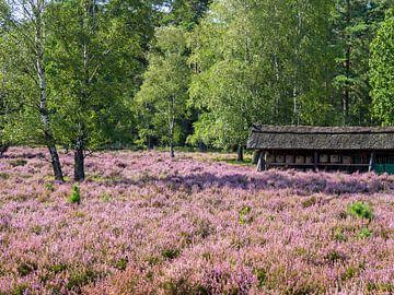 Lüneburger Heide mit Bienenstand von Katrin May