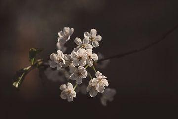 Weiße Blüte von Marieke Tegenbosch