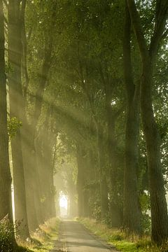 Avenue of light van Thijs Kupers