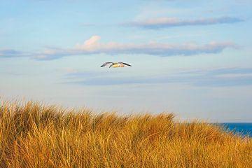 Aan de Hollandse kust van Anouschka Hendriks