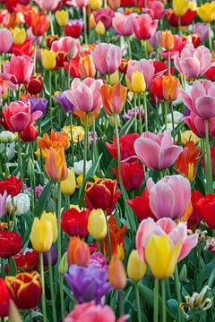 Kleurrijk voorjaar van Sander Groenendijk