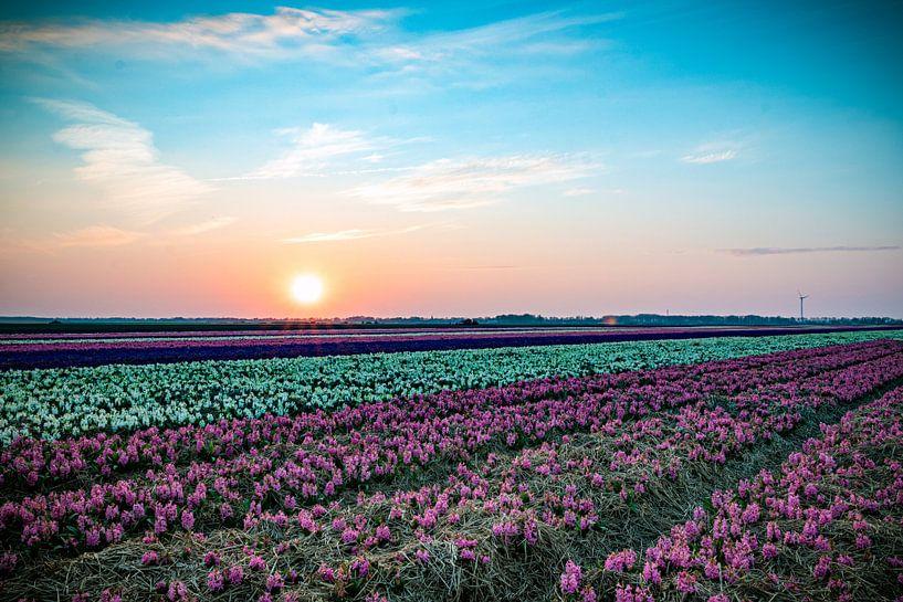 Hyacinten van Johan Mooibroek