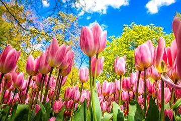 Tulpenfeld von Wilma Meurs