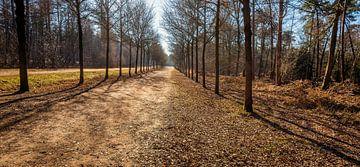 Ogenschijnlijk eindeloos pad in een Nederlands bos van Ruud Morijn