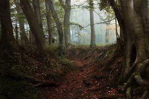 Forest of Neldoreth.