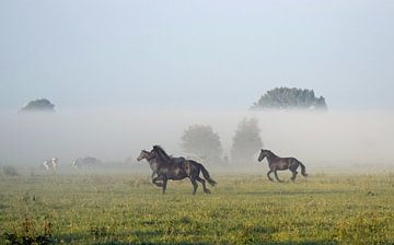 Friese paarden in de mist van Jitske Van der gaast