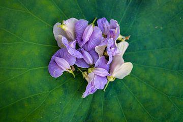 Les petites orchidées sauvages recueillies sur une feuille de lotus. sur Michael Klinkhamer