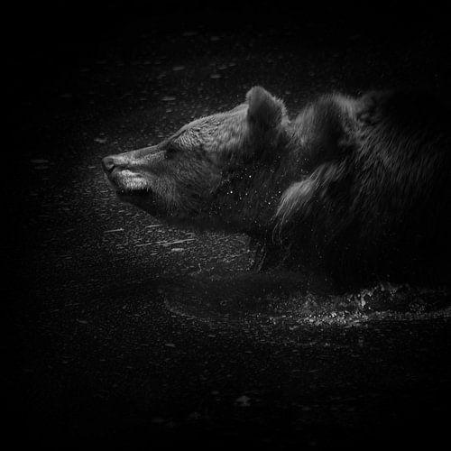 Europese bruine beer van Ruud Peters