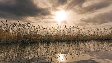 Riet aan de oever van een riviertje bij zonsondergang van Jonas Weinitschke